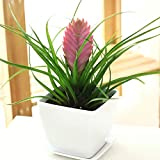 100/bag Tillandsia Seeds Tillandsia Cyanea Bonsai Flower Seeds Ornamental-Plant on Office Desk