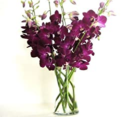 Fresh Flowers - Deep Purple Dendrobium Orchids with Vase