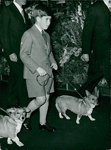 Euston Station - Vintage photo of Prince Charles with royal family dogs at Euston Station