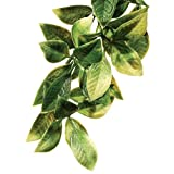 Exo Terra Plastic Terrarium Plant, Large, Mandarin, Mandarina, Large