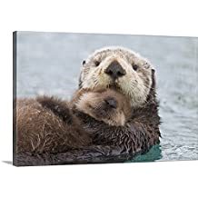 """Milo Burcham Premium Thick-Wrap Canvas Wall Art Print entitled Female Sea otter holding newborn pup out of water, Prince William Sound 24""""x16"""""""