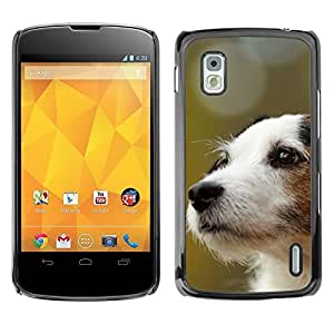 YiPhone /// Prima de resorte delgada de la cubierta del caso de Shell Armor - Jack Russell Terrier Dog Canine - LG Google Nexus 4 E960