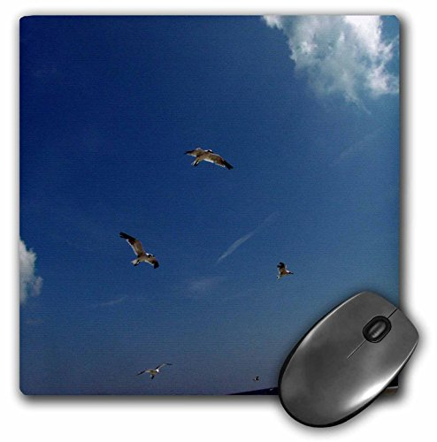 Gull Sea Trio (3dRose Dawn Gagnon Photography - Beach Scenes - Seagulls in flight, a trio flying against a vivid blue beach sky - MousePad (mp_165598_1))