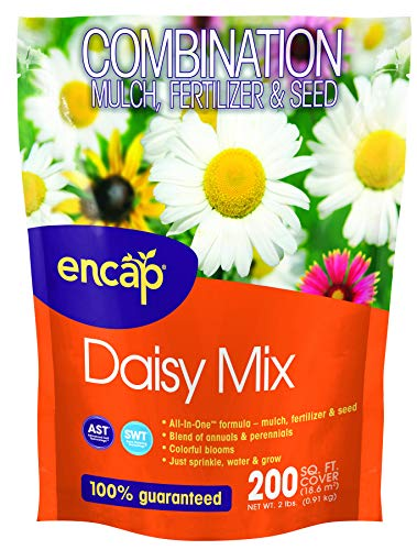 Daisy Mix from ENCAP - 4-in-1 Mix, Open-Pollinated, Non-GMO, with Instructions for Planting a Beautiful -