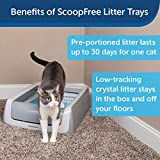 PetSafe ScoopFree Automatic Self-Cleaning Cat