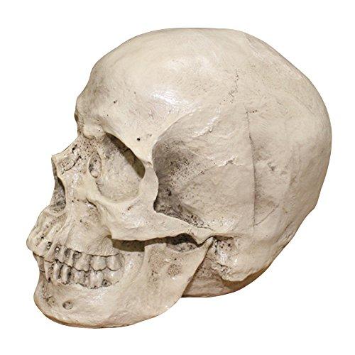 RoseSummer 1:1 Realistic Life Size Human Anatomy White Resin Replica Skull Halloween Decor