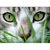 Cat Grass Sweet Oats Kitties Love It Grow for Them Naturaley 1000+ Seeds, My Pet Supplies