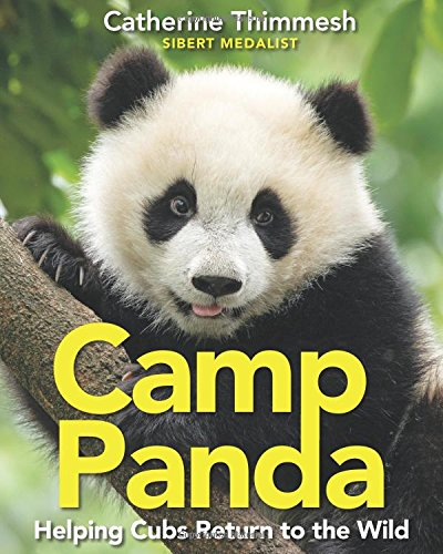 Camp Panda: Helping Cubs Return to the Wild - Panda Cubs