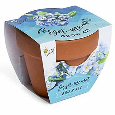 Spring Garden Mini Grow Pot Kit Plant Seeds Plant Outdoor & Indoor Forget me Not: Toys & Games