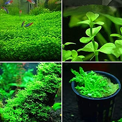 8QzJs1Tg Flower Seeds Planting 300/500Pcs Rare Aquatic Plant Seeds Aquarium Underwater Moss Grass Stem Decor - 300pcs Mixed Style Aquatic Plant Seeds : Garden & Outdoor