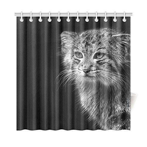 WIEDLKL Home Decor Bath Curtain Fauna Wild Pallas Cat Animals Nature Animal Polyester Fabric Waterproof Shower Curtain for Bathroom, 72 X 72 Inch Shower Curtains Hooks Included
