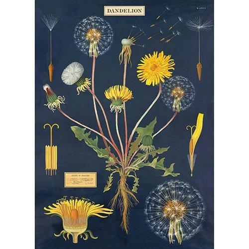 Cavallini Decorative Wrap Poster, Dandelion Chart, 20 x 28 inch Italian Archival Paper (WRAP/DAN)