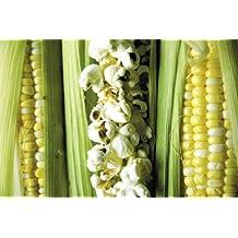 Popcorn (zea mays) Robust 2182W 25+ Seeds