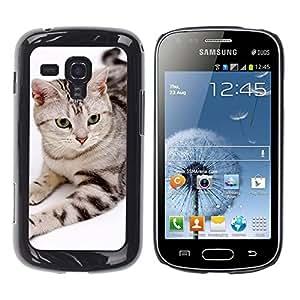 Be Good Phone Accessory // Dura Cáscara cubierta Protectora Caso Carcasa Funda de Protección para Samsung Galaxy S Duos S7562 // American Bobtail House Cat Stripes