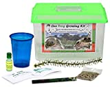 LIVE Kit SHIPPED WITH 1 Tadpole : Leopard Frog