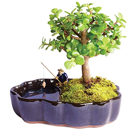bonsai trees for indoor