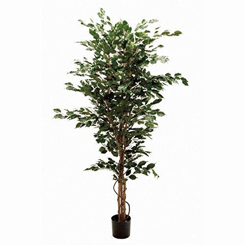 人工観葉植物 ファイカスエキゾチカL 高さ200cm fg3417 B072C5M2ND