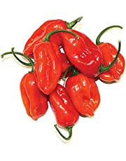 50 - Seeds : Xaman Rojo F1 Hybrid Habanero Pepper Seeds - Very Aromatic & Extremely hot.!!