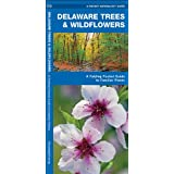 Delaware Trees & Wildflowers: A Folding Pocket Guide to Familiar Species (Pocket Naturalist Guide Series)