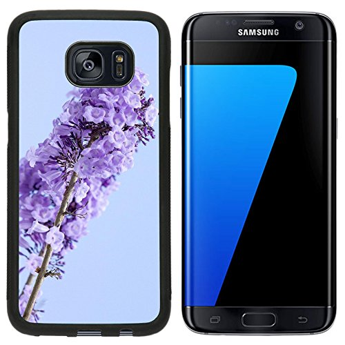 Luxlady Premium Samsung Galaxy S7 Edge Aluminum Backplate Bumper Snap Case IMAGE ID: 23417787 jacaranda flowers in blue sky background