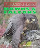 Hawks and Falcons, John Woodward, 0761402934