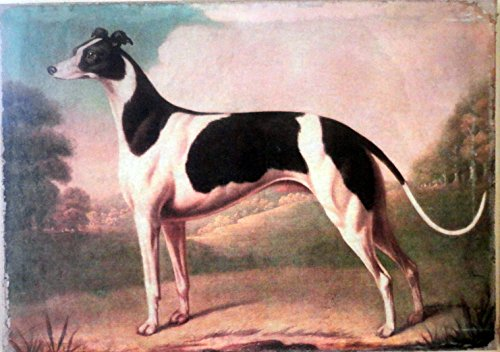 - Killingbeck English Greyhound Dog Antique Painting Print on Canvas Ready to Hang