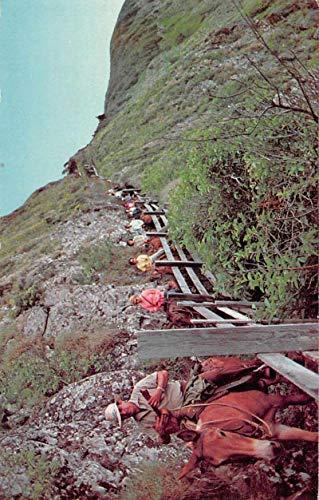 Molokai Hawaii Guided Mule Tours Advertising Vintage Postcard JA7471901