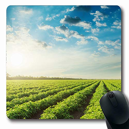 LifeCO Computer Mousepads Leaf Green Farm Agriculture Field Tomatoes Blue Sky Clouds in Sunset Nature Tomato Parks Crop Oblong Shape 7.9 x 9.5 Inches Oblong Gaming Mouse Pad Non-Slip Rubber