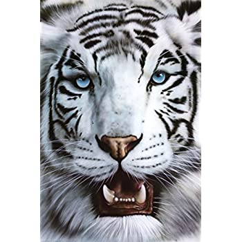 Amazon.com: Pyramid White Tiger Poster Print: Posters & Prints