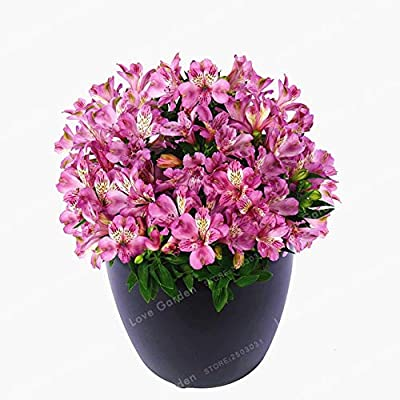 AGROBITS Rare 16 Different Colors of The Peruvian Lily Bonsai Home Garden Flowers Bonsai Potted Alstroemeria 100 Pcs/Bag: 5: Home & Kitchen