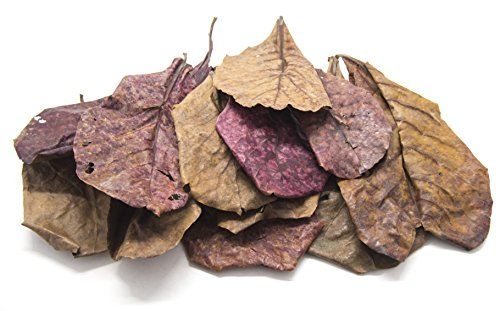 Biomax Ceramic (10 Giant Catappa Indian Almond Leaves for Aquarium Use, by Aquatic Arts)
