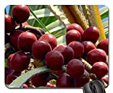 Mouse Pads - Palm Fruit Hokka Tree Hyphaene Thebaica Doum Palm