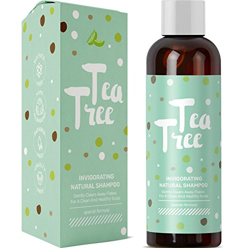 Pure Tea Tree Oil Daily Shampoo Cleanser for Itchy Dry Scalp and Dandruff with Hair Loss Preventing Oils Jojoba and Rosemary For Thicker Hair Gentle Sulfate Free Color Safe Formula for Men and Women (Normal Full Volume Shampoo)