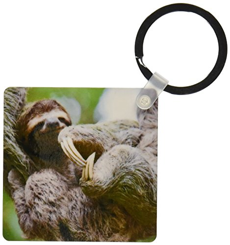 3Drose Brown-Throated Sloth Wildlife, Corcovado Costa Rica - Sa22 Jgs0021 - Jim Goldstein - Key Chains, 2.25 X 4.5 Inches, Set Of 2 (Kc_87172_1) -