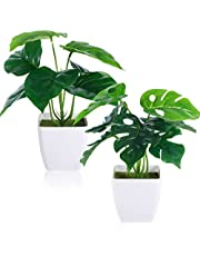 CEWOR 2 Packs Artificial Mini Greenery Potted Plants Fake Tropical Monstera Deliciosa and Scindapsus Leaves in Small Plastic Pot for Home Bathroom Shelf Farmhouse Office Desk Windowsill Decor