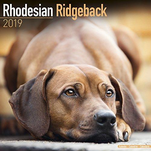 Rhodesian Ridgeback Calendar - Dog Breed Calendars - 2018 - 2019 Wall Calendars - 16 Month by Avonside