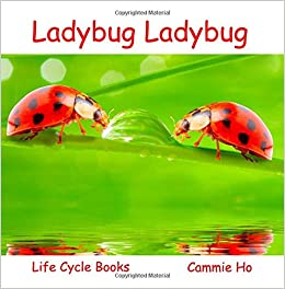 ladybug ladybug life cycle books cammie ho 9781943241026 amazon