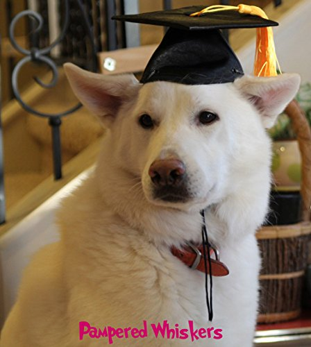 Graduation Hat for dogs and cats (Medium - 12-15