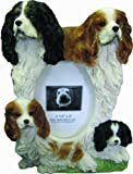 King Charles Cavalier Picture Frame Holds Your Favorite 3 x 5 Inch Photo, A Hand Painted Realistic Looking King Charles Cavalier Family Surrounding  Your Photo. This Beautifully Crafted Frame is A Unique Accent To Any Home or Office. The King Charles Cava