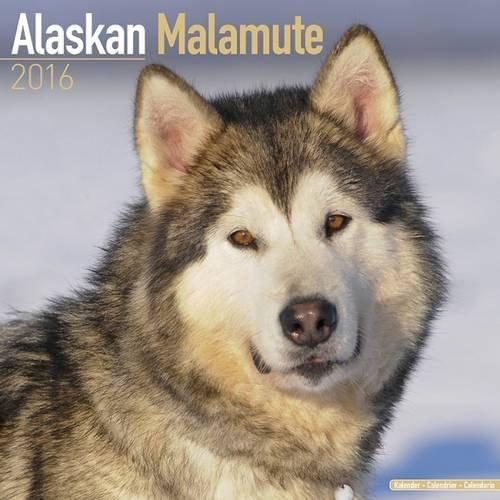 Alaskan Malamute Calendar - Breed Specific Alaskan Malamutes Calendar - 2016 Wall calendars - Dog Calendars - Monthly Wall Calendar by Avonside