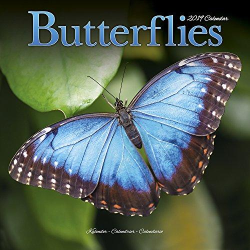 Butterfly Calendar - Butterfly Calendar - Calendars 2018 - 2019 Wall Calendars - Animal Calendar - Butterflies 16 Month Wall Calendar by Avonside