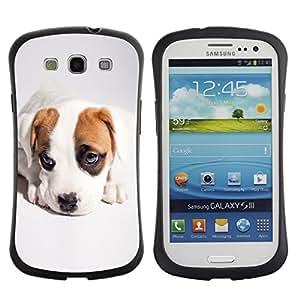 Stuss Case Hybrid PC + TPU Anti-Shock Case for Samsung Galaxy S3 - Cute Cool Puppy Dog