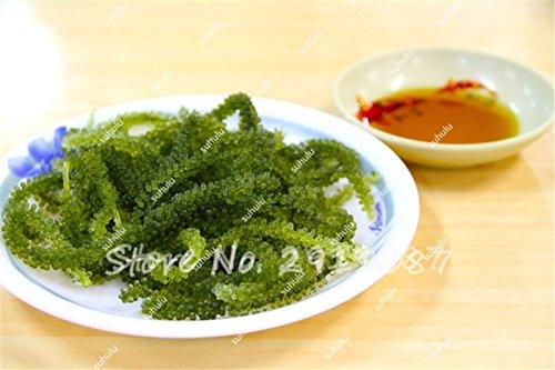 De nouvelles graines de fruits 50 Pcs Seagrapes Advanced Seeds Fruit Graine croissance naturelle Eau de Raisin Doux Kyoho Jardin So Rare 20
