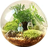 kingbuy Creative Charming Clear Glass Plant Terrarium, Home Decoration,Globe M(Set of 2pcs)