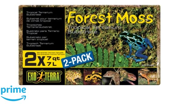 M Amtra 40002201 Terrarium Moss