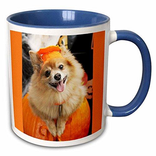 3dRose RinaPiro - Halloween - Halloween dog. Puppy dressed in Halloween costume. - 15oz Two-Tone Blue Mug (mug_221545_11) ()