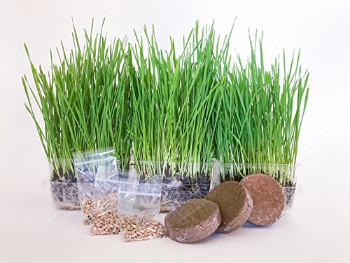 The Cat Ladies Cat Grass Growing Kit - 3 pack Organic seed, soil and BPA free containers (NON GMO). All of our seed is locally sourced for pet and pet lovers.