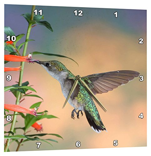 (3dRose Ruby-Throated Hummingbird Female - Marion Co. Il - Wall Clock, 10 by 10-Inch (DPP_205972_1))