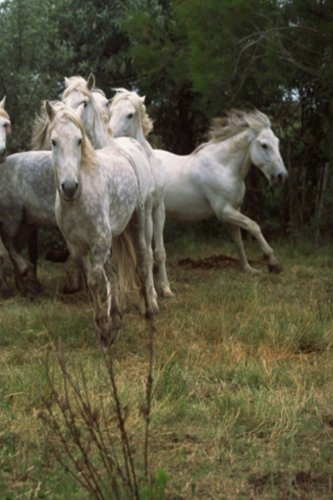 Running A Horse Farm - 9