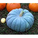 Exotic Blue Pumpkin Seeds | 20 Seeds Packet | Blue Jarrahdale Pumpkin Seeds
